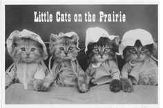 2 Vintage Domestic Kitten Postcards  Little Cats on Prairie by thecedarchest, *******Most all dressed cats are on myWell-Dressed Cats board!!