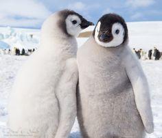 (via 500px / Penguin Secrets by David C. Schultz)
