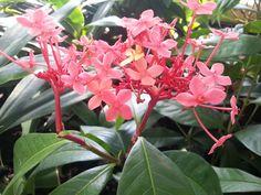 Kew Gardens image