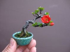 盆栽:丈の高い木は、よく転がるの画像 | 春嘉の盆栽工房