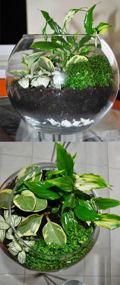 1000+ images about Terrarios on Pinterest  Terrarium