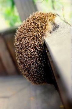 You can do it, Hedgie!