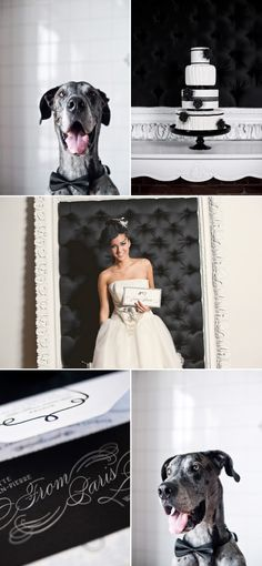 What a Great Dane wedding - black and white! This looks like my NALA!!!!!!