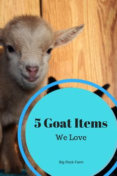 5 Goat Items We Love Hooves and Hens