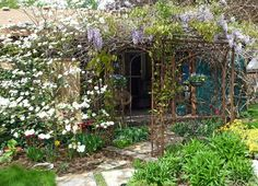 I'm going to plant wysteria and let it grow on my old gazebo.