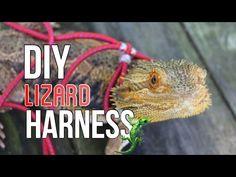 (1) DIY LIZARD HARNESS & LEASH! - YouTube