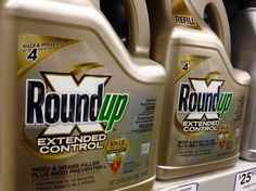 First introduced in 1974, glyphosate is now the world's most dominant herbicide. Despite claims to the contrary by the EPA, glyphosate residue remains on plants we consume and is used in more than 160 countries, with more than 1.4 billion pounds applied each year. http://www.davidwolfe.com/research-links-roundup-glyphosate-to-gluten-disorder-epidemic-cancer/?c=cam