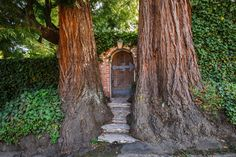 If you are blessed with trees this large on your property, what could be more perfectly magical than this gate?