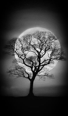 Hovering over a tree breathing life into it for another day. Best Landscape Photography, Moon Photography, Moon Pictures, Moon Pics, Beautiful Moon, Beautiful Places, Lone Tree, Moon Magic, Tree Silhouette