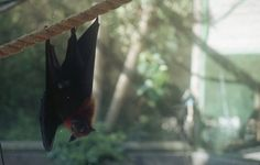 bats and nocturnal creatures