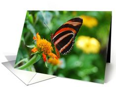 Orange Banded Longwing Butterfly Happy Birthday card