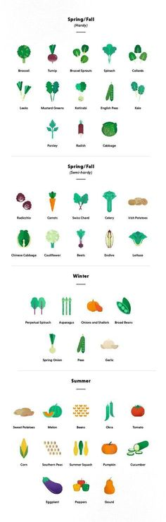 Want to know how to plant a vegetable garden? This guide for beginners will take you from start to finish on what you need to know & what to grow. #beginnervegetablegardeningideas #gardeningforbeginners