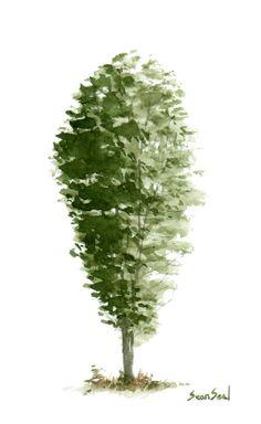 little-tree-7-sean-seal.jpg (552×900)