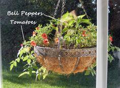 Hanging vegetable garden.