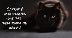 Guia Prático sobre catnip | Sílvia F. Silva | Pulse | LinkedIn