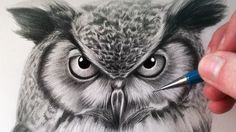 How to Draw an Owl:  From what I've seen of his drawings, you always start with the eyes, after making an x-y axis, then work to the nose/beak, then mouth, then ears, paying careful attention to proportions and placement of each feature relative to all the others.