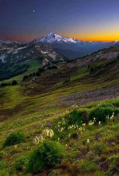 Beauty of Nature-love the Bear Grass.