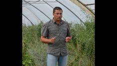 Cum sa ai mai multe soiuri intr-un singur pom - Emisiunea Agricol Button Down Shirt, Men Casual, Mens Tops, Dress Shirt