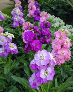 Lovely Container   ~ Stock flowers