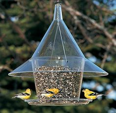 How to clean birdfeeders and birdbaths. From Duncraft's Wild Bird Blog.