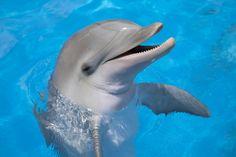Cute! Een bijzondere vriendschap tussen dolfijn en kat