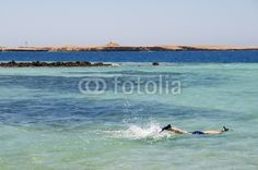 Ras Mohammed, Red Sea - Egypt #snorkeling #swimming #holiday