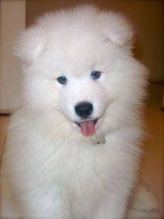 Puppy BigBoy
