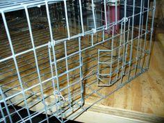 Pigeon- pigeon trap door | Animal Damage Control Archive | Trapperman.com Forums