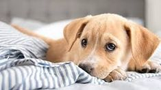Shop for toys, food, and other items to help your new puppy feel right at home. Explore the Petco resource center for guides and tips on raising your new puppy. New Puppy, Puppy Love, Mobile Vet, Puppy Supplies, Cute Dog Pictures, Sad Eyes, Puppy Party, Dog Memes, Dogs And Puppies