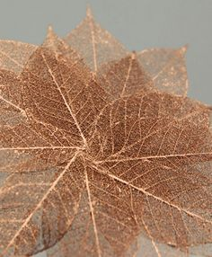"Skeleton Leaves 1-1/2"" Copper Metallic Leaves (20 leaves/pkg) $4.99 pkg/ 3 pkgs $4 each"