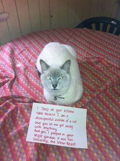 21 Examples Of Cat Shaming