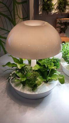 #ihhs2015 #sagegreenlife #ambienta #growlight #hydroponic