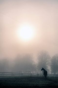 Horse , alone in the mist