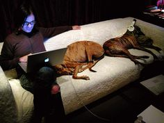 A Pack Of Retired Greyhounds (Adopted by Trent Reznor) - I wonder what they're listening to :)
