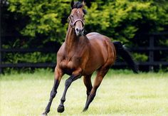 "RIP...Montjeu, a top-class racehorse who became a spectacularly successful sire, has died at Coolmore Stud in Ireland, one week short of what would have been his 16th birthday. He had suffered what a stud spokesman described as ""overwhelming septicaemia"" and could not recover from the resulting complications."