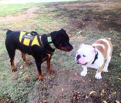 Capo y su amiga princesa