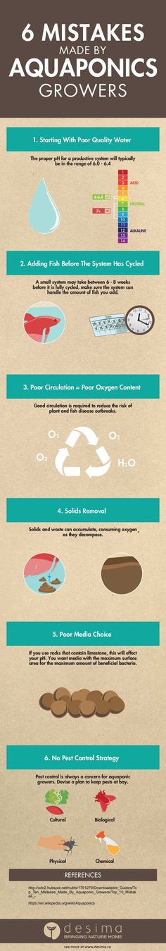 Learn from these 6 common mistakes in aquaponics so that your system can thrive. Remember if you use this infographic on your website, you must have a link back