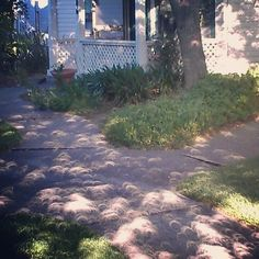 May 20, 2012 solar eclipse crescent shaped shadows in California   Source: sophiahelix