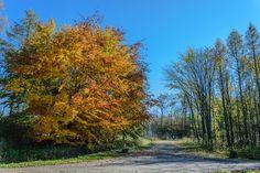 Free stock photo of alley autumn autumn colours