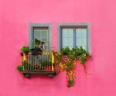 #bold #bright #pink #flowers