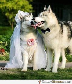 Cute+dogs+wearing+costumes+for+their+wedding