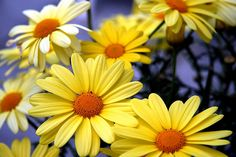 Flowers by Audiotribe, via Flickr
