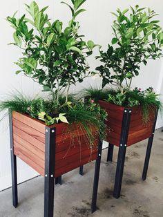 garden-box-urban-indoor-planter-compact-garden-african-mahogany-wood-handmade