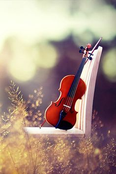 The Violin: beautiful in sound and appearance.