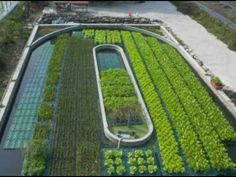 Shrimp and Vegetable symbiosis harnessed for food production. *I hadnt thought about raising shrimp, hmmmm*