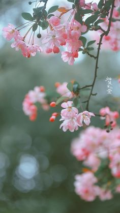 More Wallpaper, Scenery Wallpaper, Colorful Wallpaper, Wallpaper Backgrounds, Beautiful Nature Wallpaper, Beautiful Sky, Beautiful Flowers, Plant Aesthetic, Flower Aesthetic