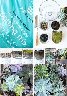 How to Make a Succulent Terrarium - MomAdvice Succulent Arrangements, Succulents Diy, Succulent Ideas, Pea Gravel, Succulent Terrarium, Terrarium Ideas, Natural Garden, Potting Soil, Cactus Flower