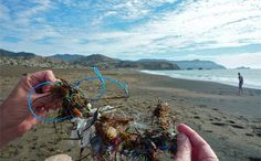 How Many Marine Mammals Did Your Plastic Grocery Bag Kill Today?