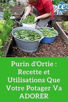 Purin d'Ortie : Recette et Utilisations Que Votre Potager Va ADORER.