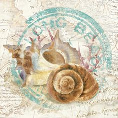 Seashells by the Seashore I by David Fischer Seaside Art, Beach Art, Jessie Willcox Smith, Beach Images, Nautical Art, Poster Prints, Art Prints, Decoupage Paper, Shell Art